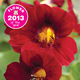 Chance find becomes Thompson & Morgan's Flower of the Year for 2013