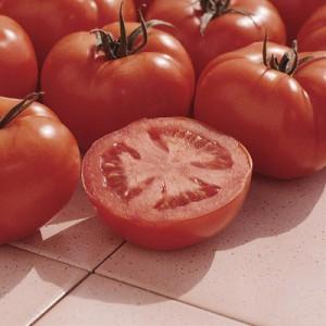 tomato ferline