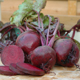 Beetroot – the versatile wonder-veg