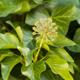 Gardening news – bees, badger culls & hybrid grass