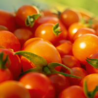 Gardening news - British Tomato Week, wildlife survey, ash dieback