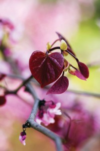 New autumn plant, bulb and shrub range now online