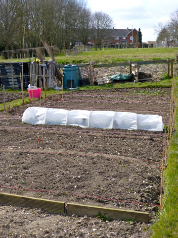 Advice for the new allotment holder