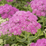 Top 10 perennial plants