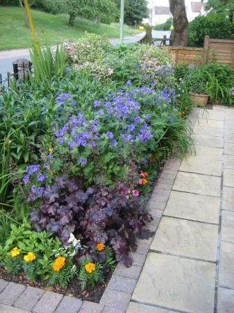 Perennials coming into flower in front garden