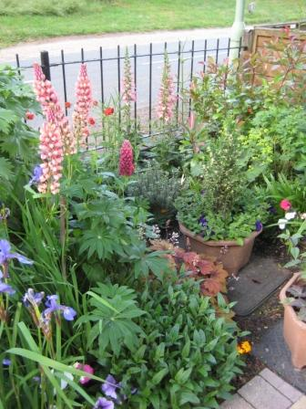 Lupin , foxglove and  geum in flowers
