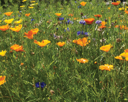 Gardening news - wild gardens, slugs and circadian rhythms