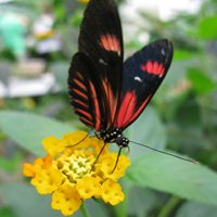 Gardening news - National Allotments Week, butterflies and nitrogen