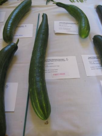 Winning Ridge Cucumber