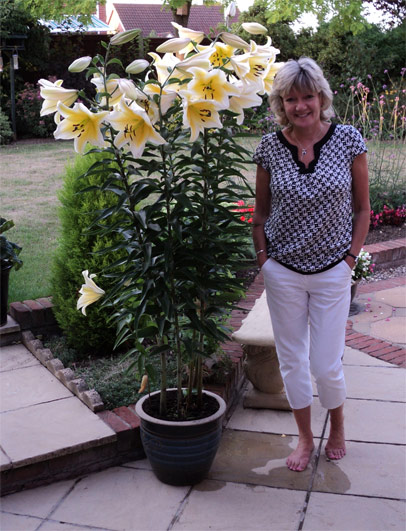 Staff Tree Lily Competition Results Blog At Thompson