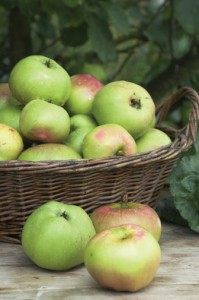 Bramley Apple Pie Week