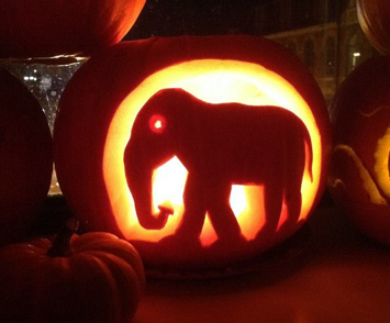 the gallery for elephant pumpkin carving
