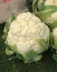 Cauliflower - the comeback