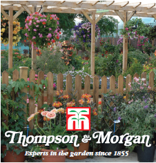 Exciting career opportunities within Thompson & Morgan