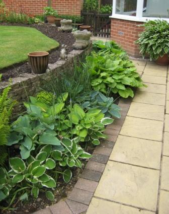 Hostas , lets hope the slugs keep away
