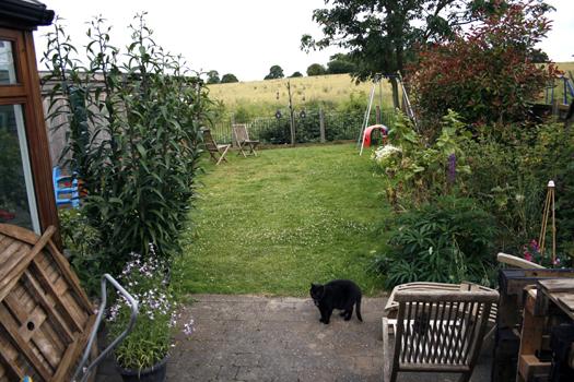 My new south-facing garden