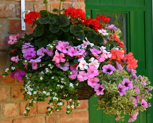 Small Hanging Basket Flowers: Blog At Thompson & Morgan