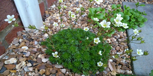 Plants for a small garden by our customer amanda blog for Plants for small gardens