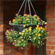 How to plant an easy fill hanging basket for winter
