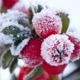 Enjoy December's garden