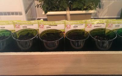 A great way to grow herbs – the windowsill gardener