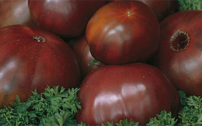 5 things you need to know about Tomatoes