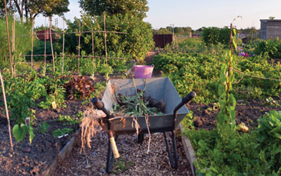 National Allotment Week – A plot for all ages