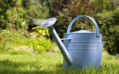 Watering plants during summer