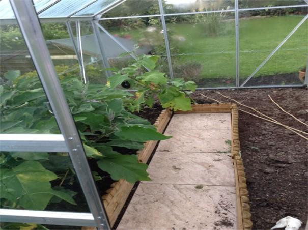 amandas-sept-greenhouse-1