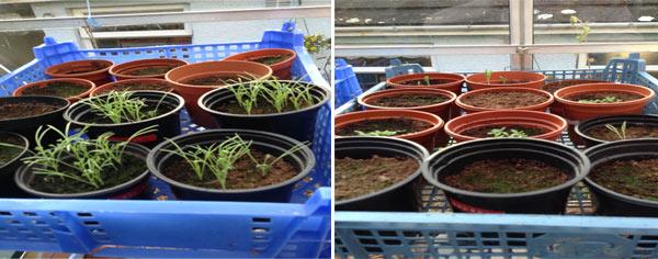 amandas-sept-greenhouse-3