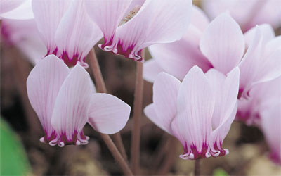 Colour in the Cold: 5 Wildflowers for Winter Gardens