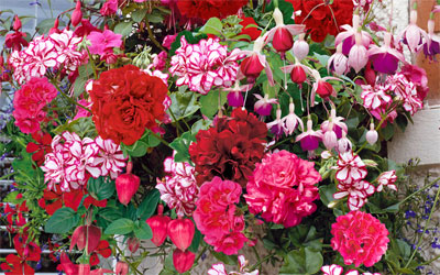 Top 5 Hanging Basket Plants