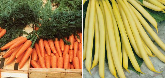 Carrot 'Primo' & Dwarf Bean 'Sonesta'