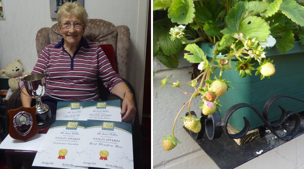 Bournemouth in Bloom awards & Strawberry 'Irrestitible'