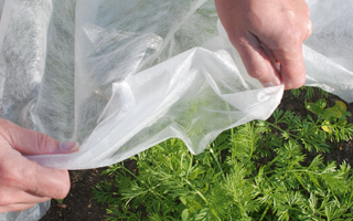 Winter protection advice for new gardeners