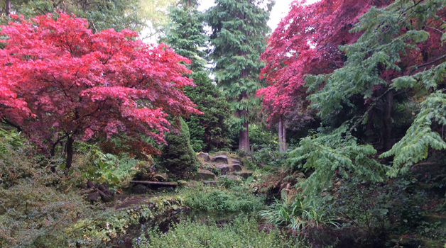 Acers on a spectacular scale - October 2016