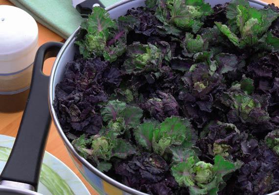 kalettes brassica petit posy mix