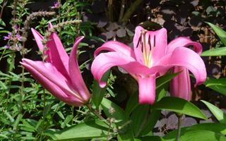 Watch out plants – No hiding place!