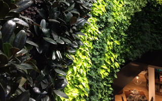 Indoor plants – mental health, air quality and productivity!