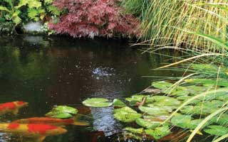 How to Choose The Best Plants to Compliment Your Garden Pond
