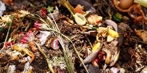 composting waste